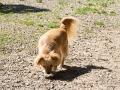 Cães Adoção (1)