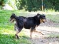 Cães Adoção (11)