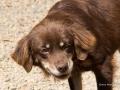 Cães Adoção (12)