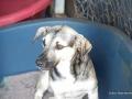 Cães Adoção (14)