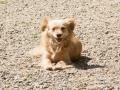 Cães Adoção (16)