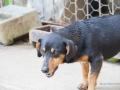 Cães Adoção (18)