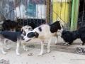 Cães Adoção (21)