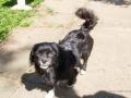 Cães Adoção (3)