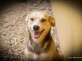 Cães Adoção (34)
