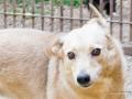 Cães Adoção (36)