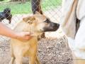 Cães Adoção (38)