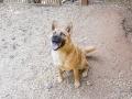 Cães Adoção (41)