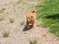 Cães Adoção (44)
