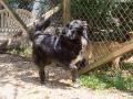 Cães Adoção (45)