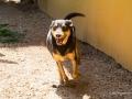 Cães Adoção (48)