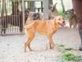 Cães Adoção (49)