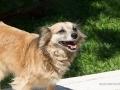 Cães Adoção (5)