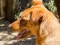 Cães Adoção (54)
