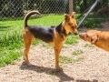 Cães Adoção (56)