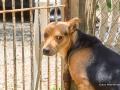 Cães Adoção (58)