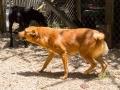 Cães Adoção (59)