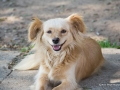 Cães Adoção (6)