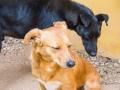 Cães Adoção (61)