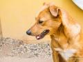 Cães Adoção (62)
